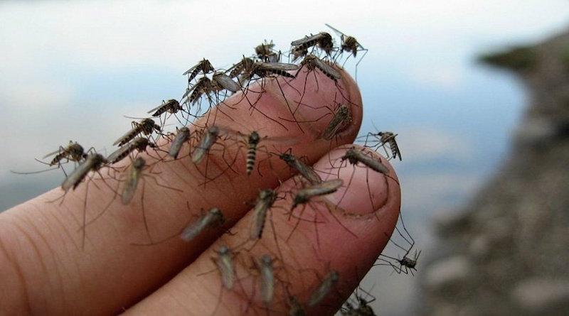 Как мне удалось избавиться от комаров на даче при помощи трав