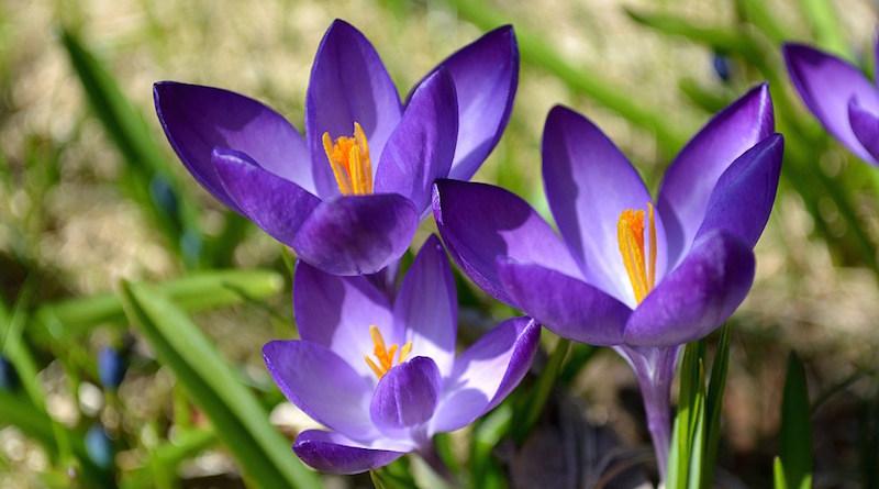 Морозостойкие цветы
