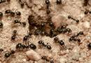 Какую пользу приносят муравьи для сада и огорода
