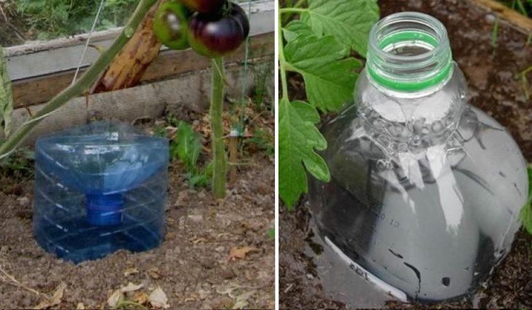 Глубокий полив при помощи пластиковой бутылки