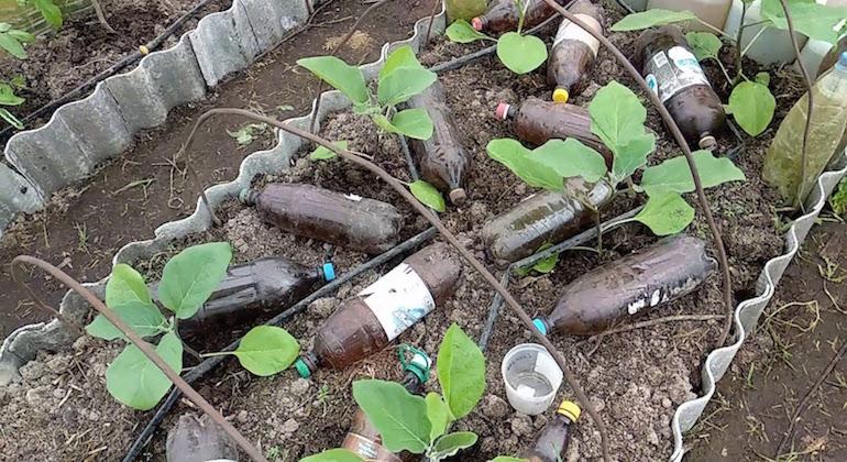 Делаем грелки для грядок из пластиковых бутылок