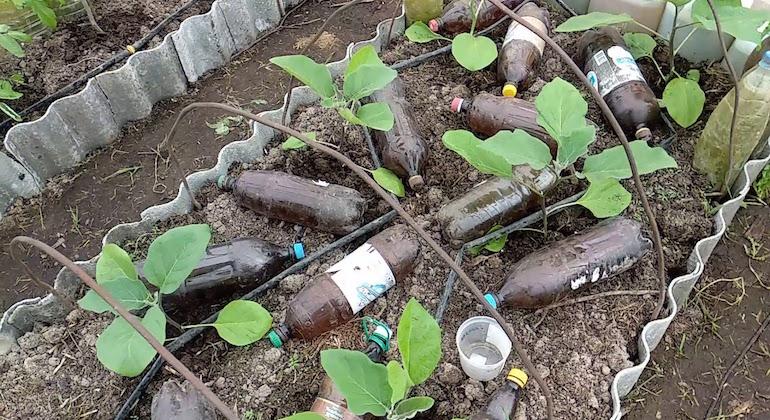 Грелки для грядок из пластиковой бутылки