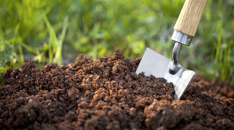 Измеряем кислотность почвы в домашних условиях