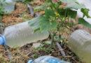 Полезное применение пластиковых бутылок на даче (Часть 13)