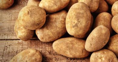 Выкапываем картошку для длительного хранения