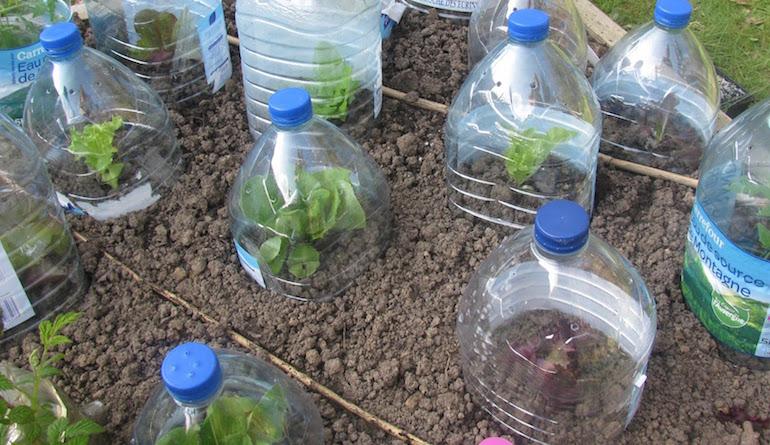 Мини парники из пластиковых бутылок