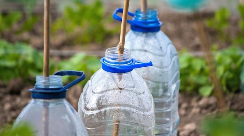 Мини парники из пластиковых бутылок для грядок