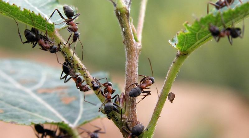 Муравьи на ветке дерева