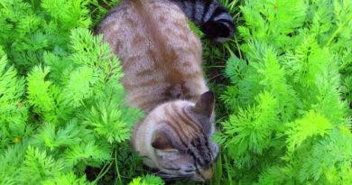 Чем можно отпугнуть кошек от грядок