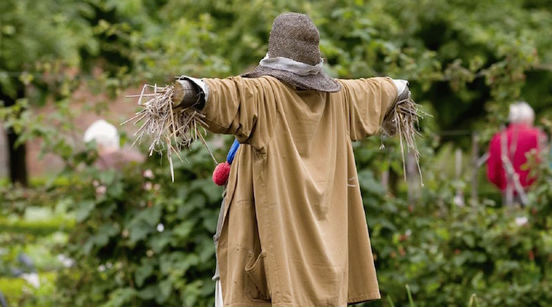 Как отпугнуть птиц с огорода