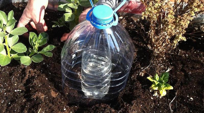 Рациональная система капильного полива из пластиковых бутылок