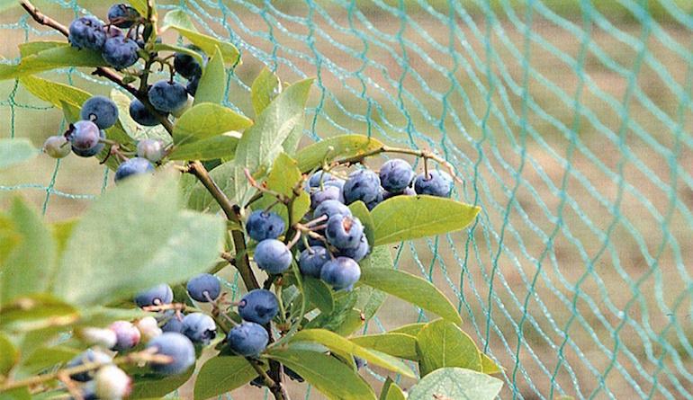 Сетка для защиты ягод от птиц