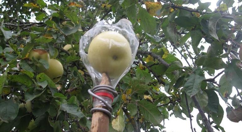 Собиратель для яблок из пластиковых бутылок