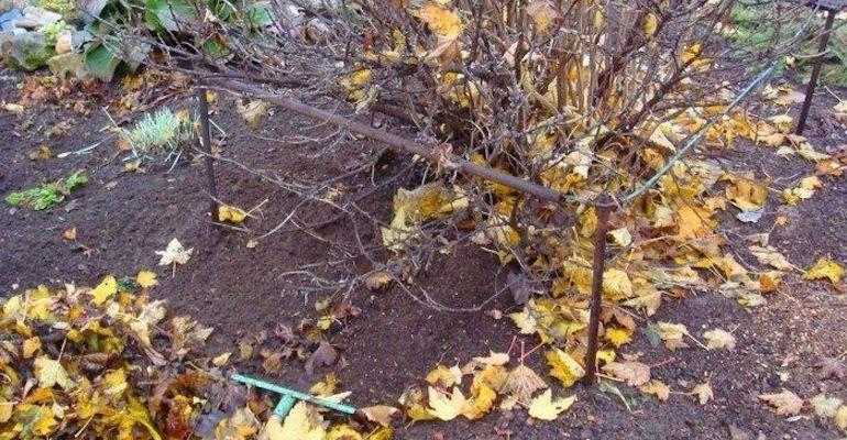 Осенний уход за почвой