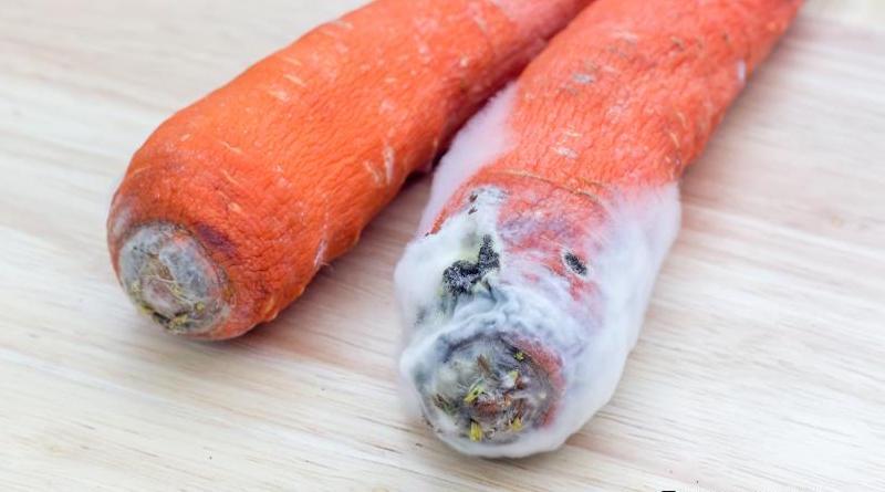 Морковь начала гнить во время хранения