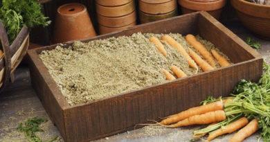 Хранение моркови в песке