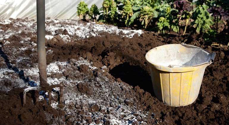 Производим известкование почвы на участке