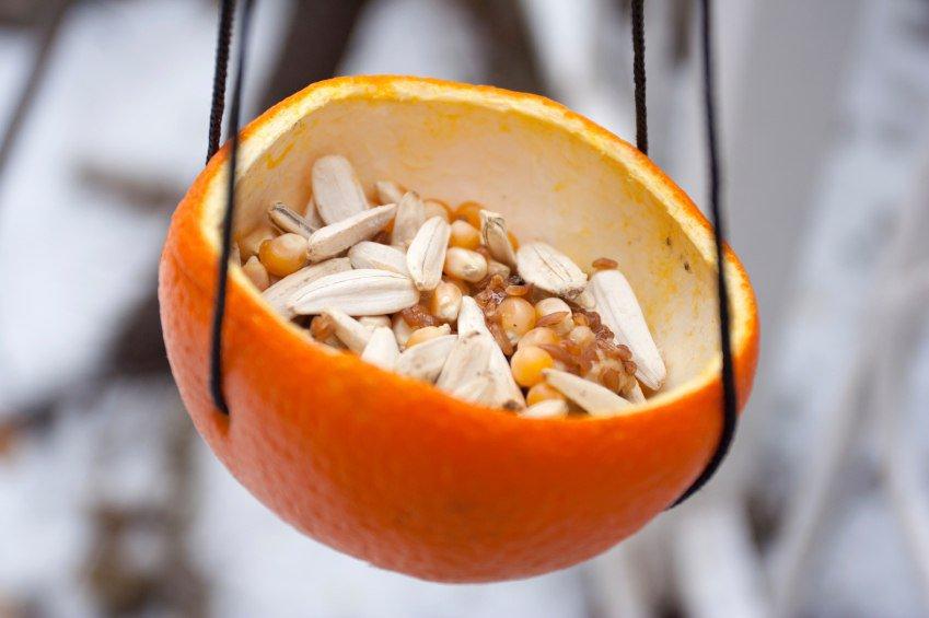 Делаем кормушку из апельсиновой корки