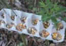 Полезное применение лотков из-под яиц на даче (Часть 1)