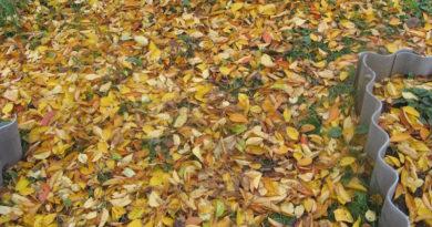 Осенняя листва лежит на участке между грядок
