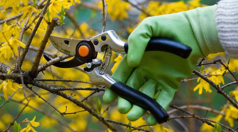 Осенние работы в огороде - ноябрь