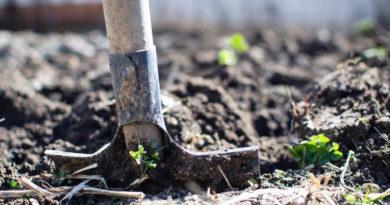 Стоит ли перекапывать огород осенью