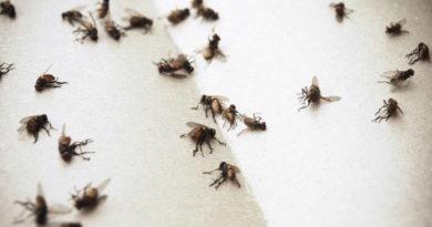 Уничтожаем мух в дачном доме