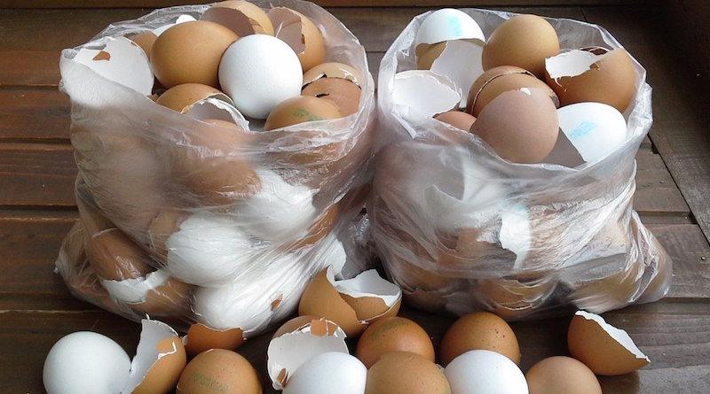 Яичная скорлупа в качестве удобрения
