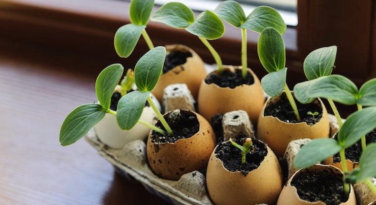 Горшочки из яичной скорлупы