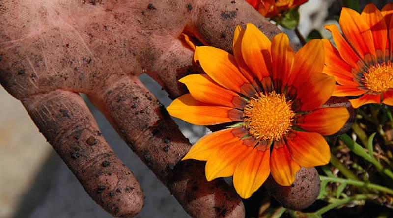 Как отмыть руки после работы в огороде