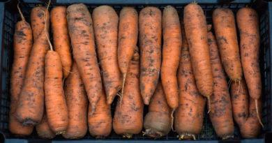 Ошибки при хранении моркови