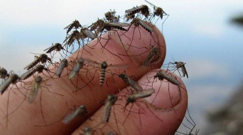 Избавляемся от комаров на даче