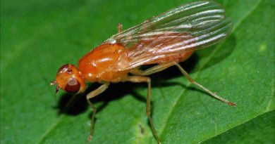 Избавляемся от морковной мухи