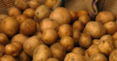 5 ошибок при хранении картошки, которые могут погубить урожай