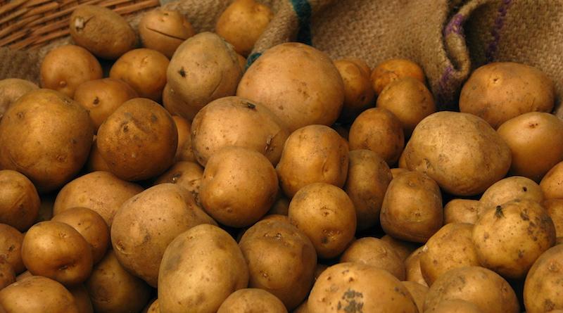 Ошибки во время хранения картофеля