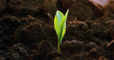 Стоит ли покупать плодородный грунт