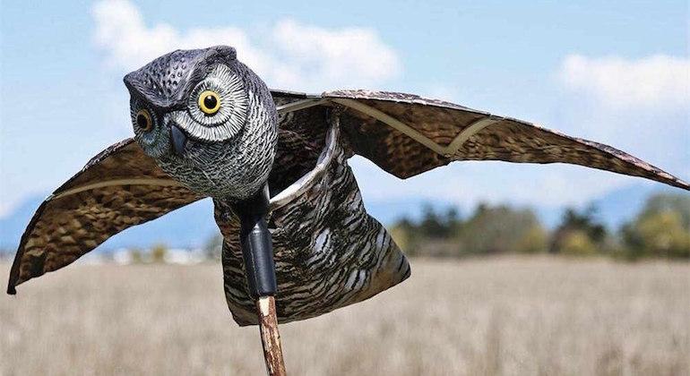 Деревянное пугало хищных птиц