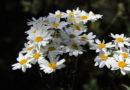 Натуральные инсектициды для огорода: чем заменить дорогостоящую химию