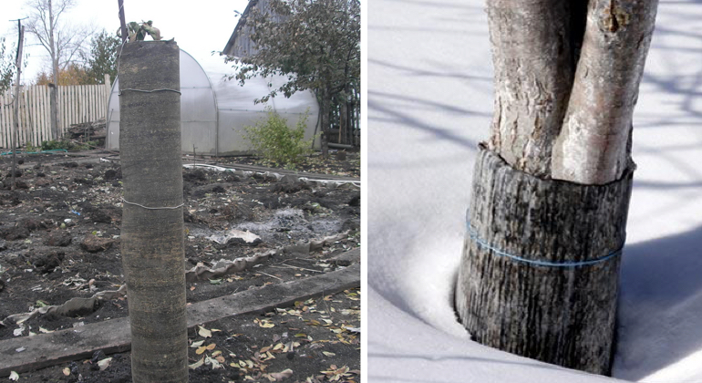 Защищаем ствол дерева от грызунов при помощи рубероида