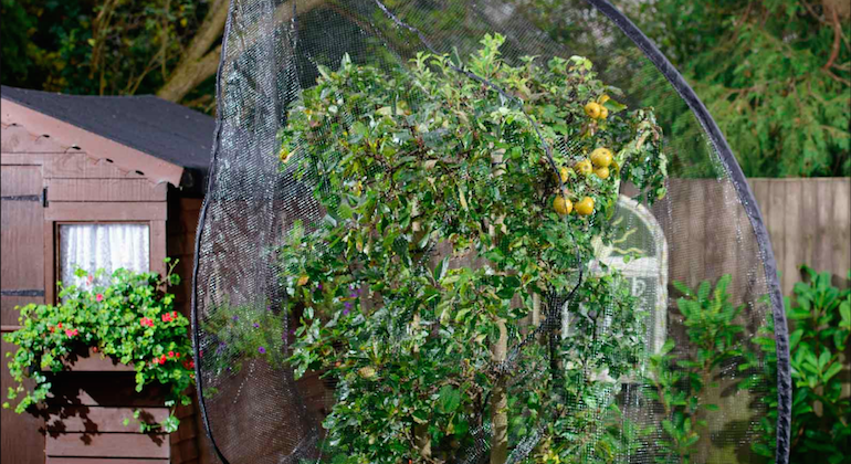 Защита плодовых деревьев от птиц