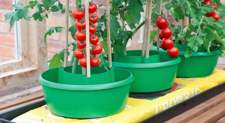 Стойка для выращивания томатов