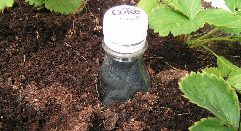 Готовое устройство для сохранения влаги в почве из пластиковой бутылки