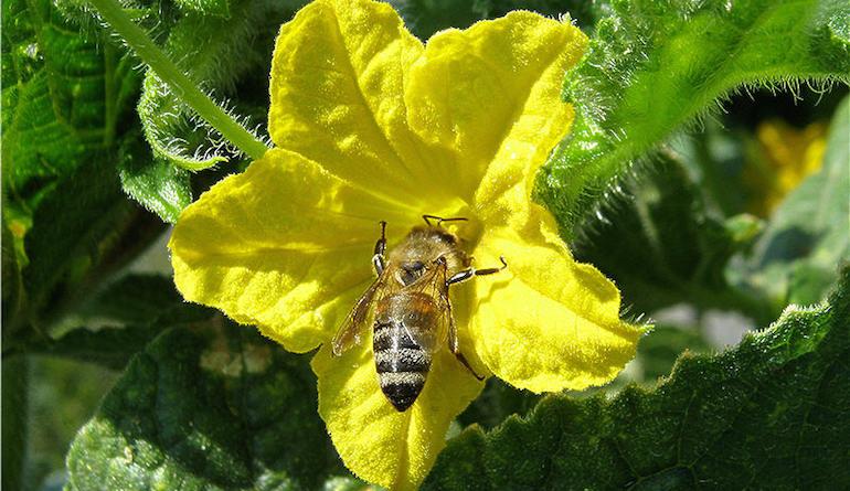 Опыление цветка