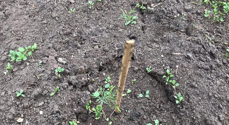 Следы муравьев в теплице. Ямки, канавки, входы в подземный муравейник