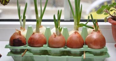 Полезное применение яичных лотков в садоводстве