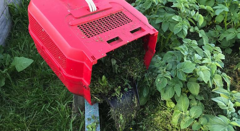 Трава из газонокосилки для наполнения высоких грядок