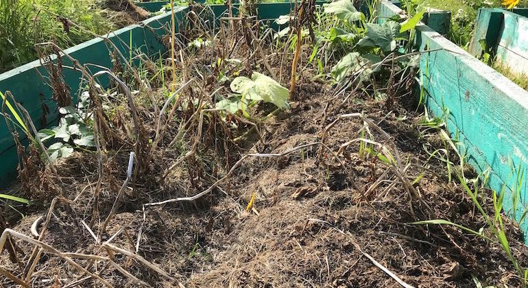 К концу сезона трава внутри высокой грядки начала гнить.