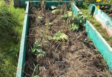 Чем заполнить высокие грядки, если нет земли и компоста