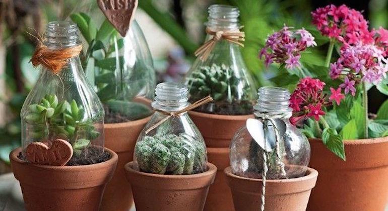 Парники из пластиковых бутылок для горшечных растений